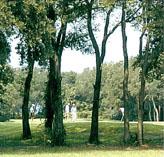 Fernandina Beach Golf Club 20