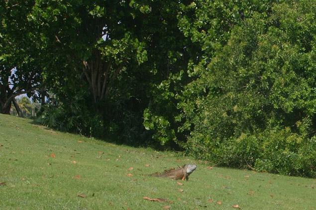 Crandon Golf Course 8