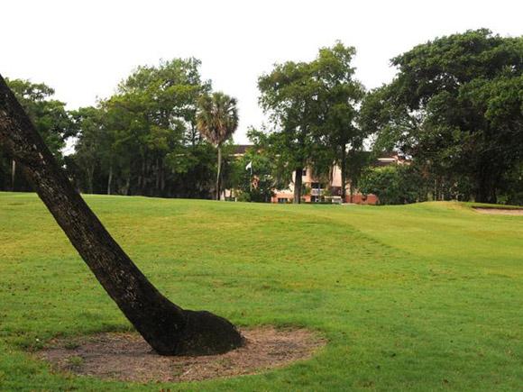 Palm Aire - Palms Course 14